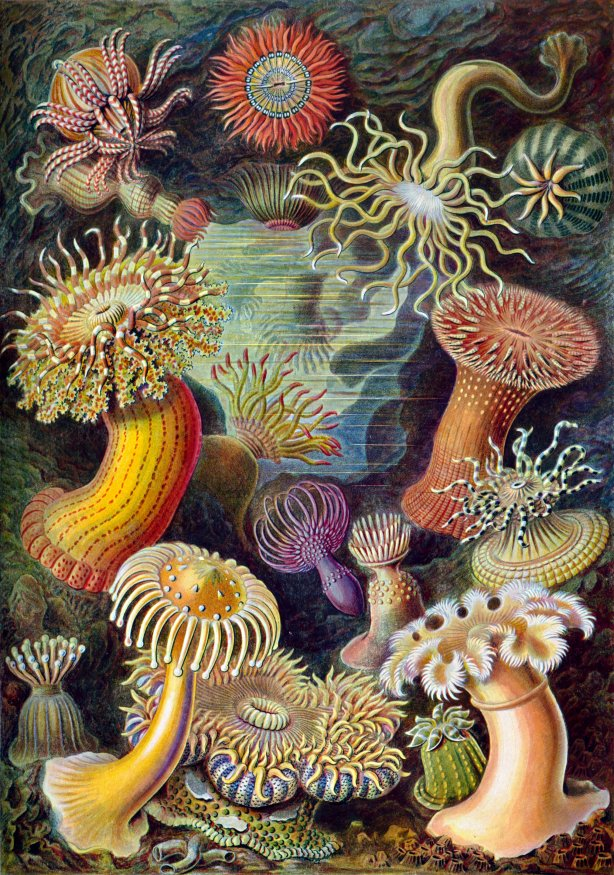 Haeckel's Opera Theater of Sea Creatures